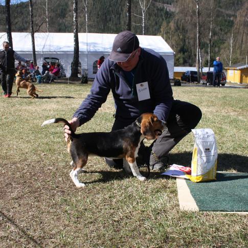 Bir val Beagle