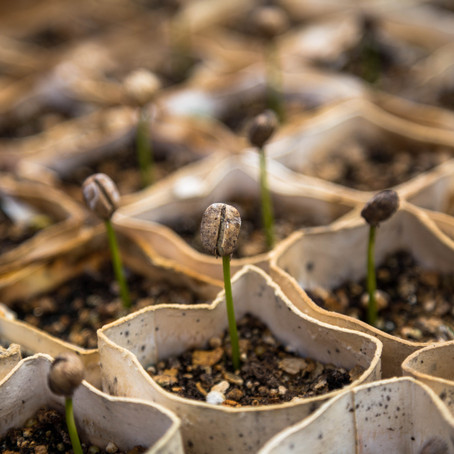 Sowing Seeds of Division in 3 Easy Steps