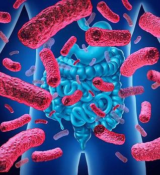 Microbiote instestinal 2.jpg