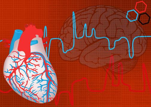 heart-brain-shutterstock-69462694-WEBONL