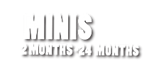 MINIS WEB TITLE.png