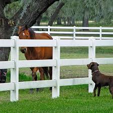 horse fence.jpg
