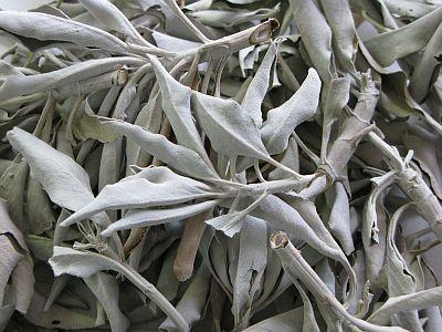 White sage, powerful aura cleaning Martha's tarot psychic wappingers falls