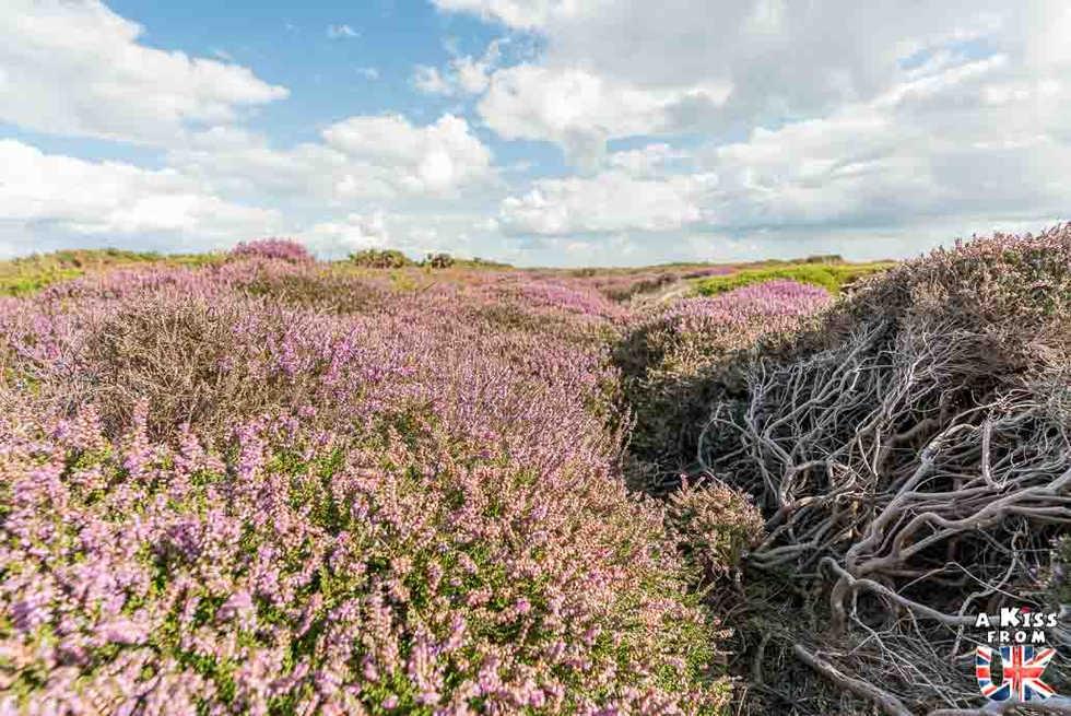 Dunwich Heath - Que voir dans le suffolk en Angleterre ? Visiter le Suffolk avec A Kiss from UK, le guide et blog du voyage en Ecosse, l'Angleterre et Pays de Galles.