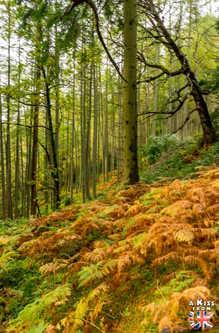 Conic Hill - A voir et à faire dans le Loch Lomond et les Trossachs en Ecosse. Visiter le Parc National du Loch Lomond et des Trossachs avec notre guide complet sur cette région écossaise.