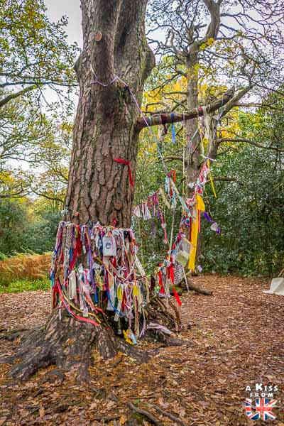 Doon Hill and Fairy Kowle - A voir absolument et à faire dans le Loch Lomond et les Trossachs en Ecosse - Visiter le Parc National du Loch Lomond et des Trossachs avec notre guide complet sur cette région écossaise