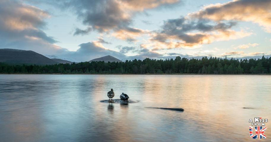 Loch Morlich dans les Cairngorms -  50 photos qui vont vous donner envie de voyager en Ecosse après l'épidémie de coronavirus - Découvrez en image les plus beaux endroits d'Ecosse à visiter.