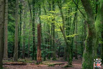 Tall Tree Trail - Blackwater - Que faire dans la New Forest en Angleterre ? Visiter les plus beaux endroits à voir absolument dans la New Forest avec notre guide complet sur cette région.