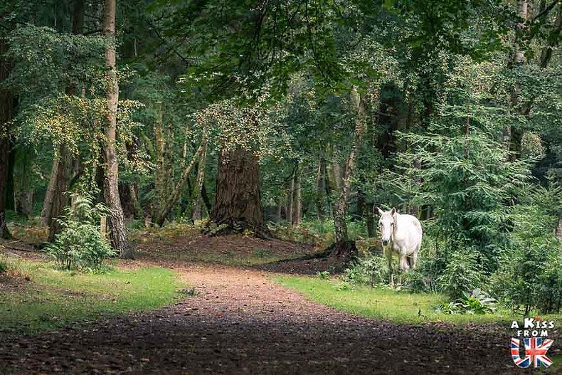 Blackwater dans la New Forest - Découvrez les plus beaux paysages d'Angleterre avec notre guide voyage qui vous emménera visiter les plus beaux endroits d'Angleterre.