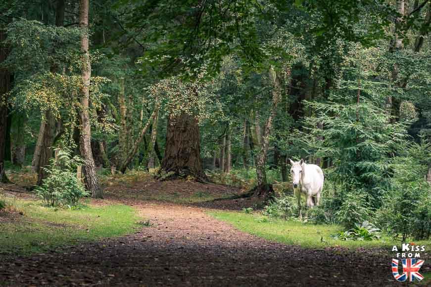 Cheval blanc en liberté - Tall Trees Trail dans la New Forest - 30 photos qui vont vous donner envie de voyager en Angleterre après l'épidémie de coronavirus - Découvrez les plus belles destinations et les plus belles régions d'Angleterre à visiter.