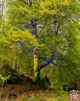 The Enchanted Forest - Road Trip de 8 jours en Ecosse à l'automne - A Kiss from UK, guide et blog voyage sur l'Ecosse, l'Angletere et le Pays de Galles