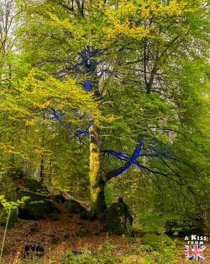 Enchanted Forest - A faire et à voir absolument dans le Perthshire en Ecosse ? Visiter le Perthshire et ses incontournables avec A Kiss from UK, le blog du voyage en Ecosse, Angleterre et Pays de Galles