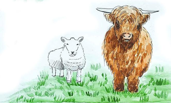 Dessin de vache écossaise - Carnet de voyage en Ecosse : un roadtrip écossais illustré par les dessins de Maëlle - les plus beaux paysages d'Ecosse en dessins et en aquarelles | A Kiss from UK - Guide et blog voyage sur l'Ecosse, l'Angleterre et le Pays de Galles.
