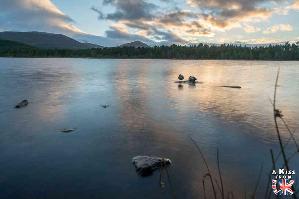 Loch Morlich - Que voir dans les Cairngorms en Ecosse ? Visiter les Cairngorms avec A Kiss from UK, le guide et blog du voyage en Ecosse.