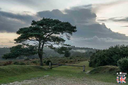 Bratley Inclosure & Mikham Wood - Que faire dans la New Forest en Angleterre ? Visiter les plus beaux endroits à voir absolument dans la New Forest avec notre guide complet sur cette région.