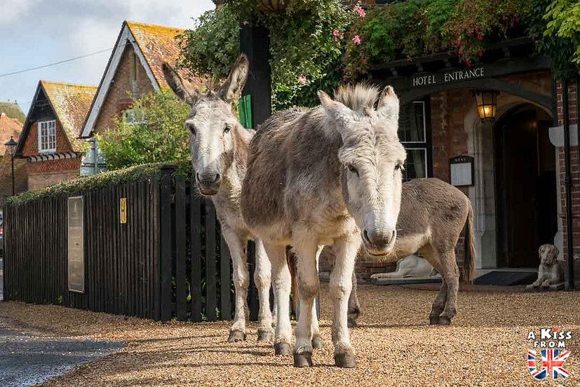 Beaulieu - Que faire dans la New Forest en Angleterre ? Visiter les plus beaux endroits à voir dans la New Forest avec notre guide complet sur cette région - A Kiss from UK, le blog du voyage en Grande-Bretagne.