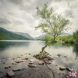 The Lone Tree - Que voir dans le Parc National du Snowdonia au Pays de Galles ? Visiter le Snowdonia avec A Kiss from UK, blog du voyage en Ecosse, Angletere et Pays de Galles.