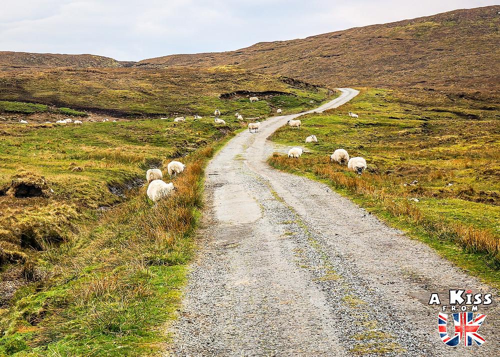 conduire sur une single track road, les petites routes écossaises,  au royaume uni ecosse angleterre pays de galles passing place a kiss from uk
