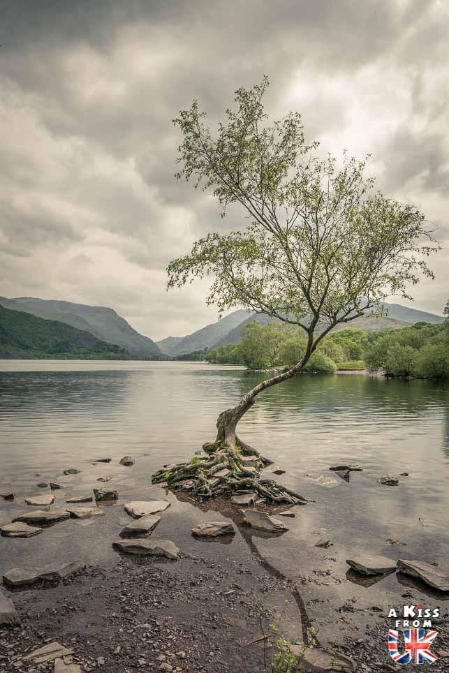 The Lone Tree dans le Snowdonia - 15 photos qui vont vous donner envie de voyager au Pays de Galles après le Brexit ! - Découvrez les plus belles destinations et les plus belles régions du Pays de Galles en image.
