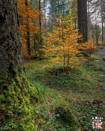 La forêt de The Hermitage - A faire et à voir absolument dans le Perthshire en Ecosse ? Visiter le Perthshire et ses incontournables avec A Kiss from UK, le blog du voyage en Ecosse, Angleterre et Pays de Galles