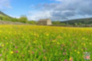 Les Yorkshire Dales. Les régions du Nord de l'Angleterre à visiter. Voyagez à travers les plus belles régions d'Angleterre avec nos guides voyage et préparez votre séjour dans les endroits incontournables de Grande-Bretagne.