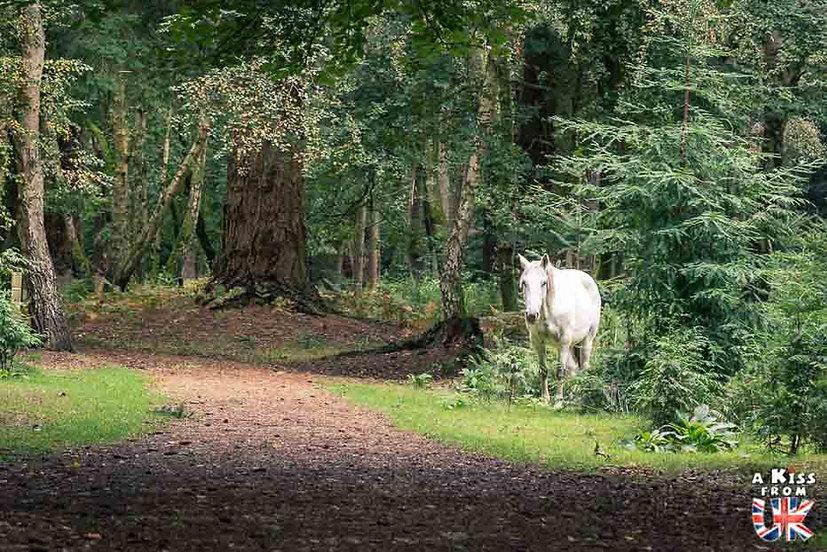 Tall Tree Trail - Blackwater - Que faire dans la New Forest en Angleterre ? Visiter les plus beaux endroits à voir dans la New Forest avec notre guide complet sur cette région - A Kiss from UK, le blog du voyage en Grande-Bretagne.