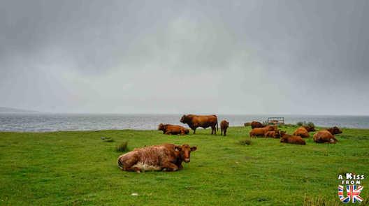 La B8035 sur l'île de Mull - Les 15 plus belles routes d'Ecosse - road trip en Ecosse - A Kiss from UK, le guide & blog du voyage en Ecosse, Angleterre et Pays de Galles