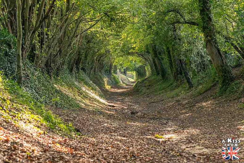 Halnaker Tree Tunnel dans le Sussex - Découvrez les plus beaux paysages d'Angleterre avec notre guide voyage qui vous emménera visiter les plus beaux endroits d'Angleterre.