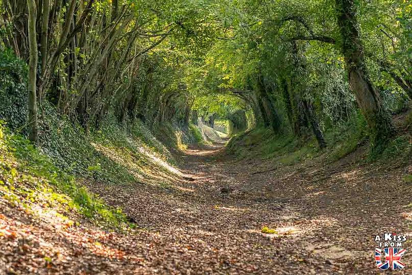Halnaker Tree Tunnel dans le Sussex - Les lieux à voir absolument en Angleterre en dehors de Londres. Découvrez quels sont les plus beaux endroits d'Angleterre et les incontournables à visiter en dehors de Londres lors de votre voyage - A Kiss from UK, le blog du voyage en Grande-Bretagne.