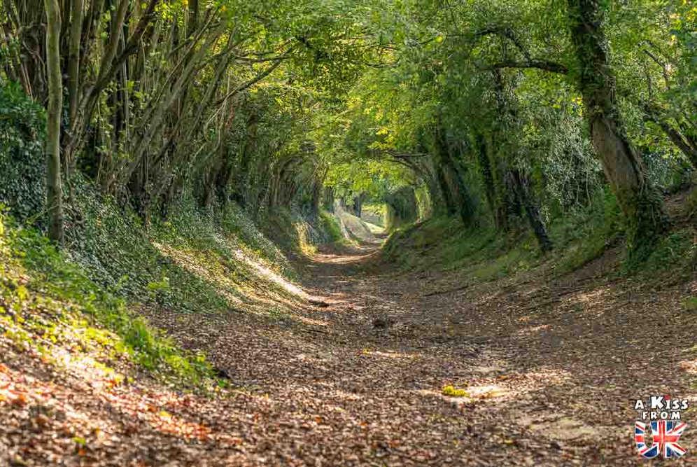 Halnaker Tree Tunnel - Que voir absolument dans le Sussex en Angleterre ? Visiter le Sussex  et ses plus beaux endroits avec A Kiss from UK, le guide et blog du voyage en Ecosse, Angleterre et Pays de Galles.