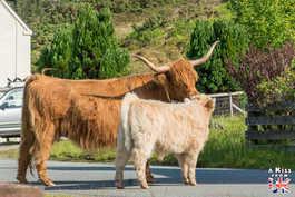 Duirinish - Que faire et que voir sur l'île de Skye en Ecosse ? Visiter les plus beaux endroits de l'île de Skye avec notre guide complet.