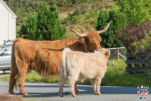 Le village de Duirinish en Ecosse - 5 endroits où voir des vaches écossaises à coup sûr - Découvrez les mielleurs lieux pour trouver des vaches Highlands pendant votre voyage en Ecosse - A Kiss from UK le blog et guide du voyage en Grande-Bretagne