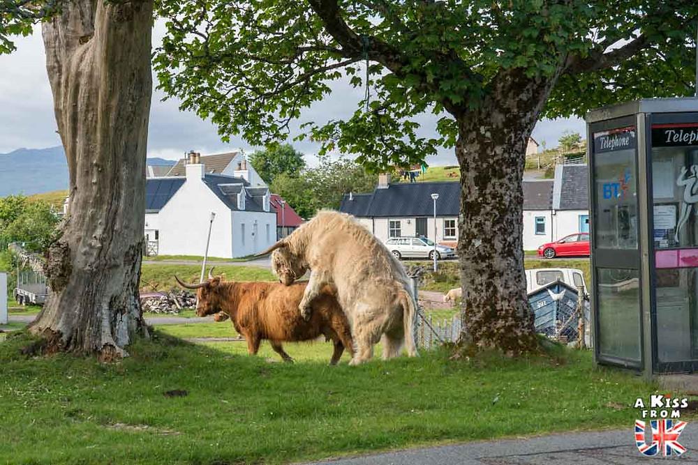 Duirish, le village des vaches écossaises - A Kiss from UK, le guide et blog du voyage en Ecosse, Angleterre et Pays de Galles