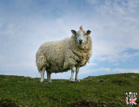Brother's Point - Visiter l'île de Skye en 4 Jours. A voir et à faire. Lieux à voir et itinéraire de Roadtrip en Ecosse sur l'île de Skye - A Kiss from UK le guide et  blog voyage Ecosse, Angleterre et Pays de Galles