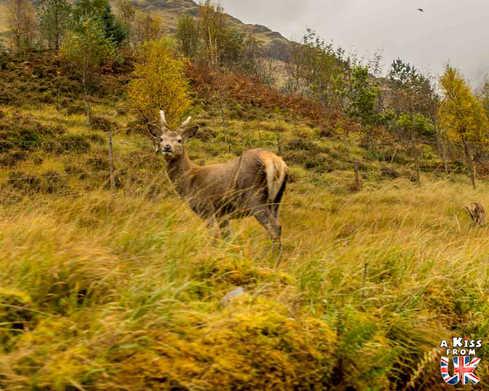 Glen Etive - A faire et à voir dans le Glencoe et sa région en Ecosse. Visiter le Glencoe avec A Kiss from UK, le guide et blog du voyage en Ecosse.