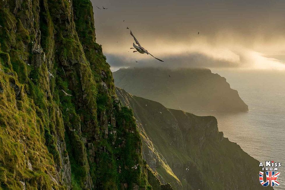 Les oiseaux marins qui volent le long des hautes falaises de St Kilda en Ecosse - Visiter St Kilda - Que voir sur l'île de St Kilda en Ecosse ? - A Kiss from UK, le guide et blog du voyage en Ecosse.