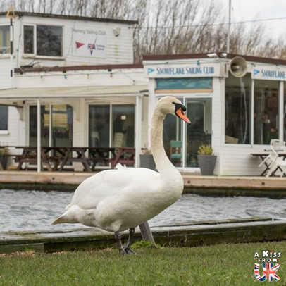 Horning - Que faire dans le Norfolk en Angleterre ? Visiter le Norfolk et les plus beaux endroits à voir dans le Parc National des Broads avec notre guide complet sur cette région d'Angleterre.