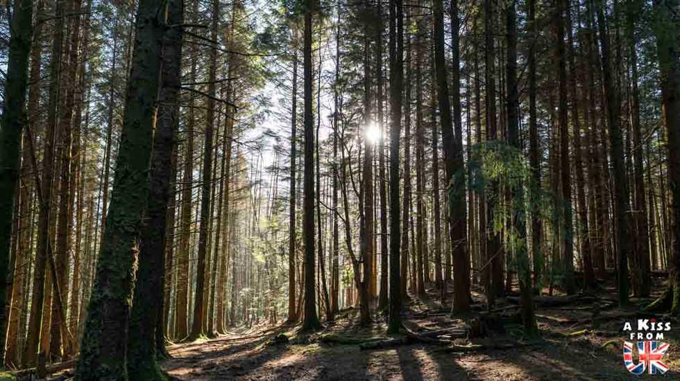 Glencoe Lochan Trail - A faire et à voir dans le Glencoe et sa région en Ecosse. Visiter le Glencoe avec A Kiss from UK, le guide & blog du voyage en Ecosse, Angletere et Pays de Galles