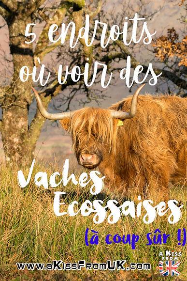 Découvrez où voir des vaches écossaises à coup sûr grâce à A Kiss from UK,  le guide & blog du voyageen Ecosse, Angleterre et Pays de Galles