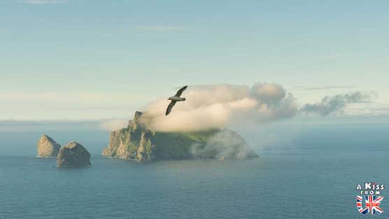 Fulmar Boréal sur St Kilda - Visiter l'archipel de St Kilda en Ecosse - Que voir sur l'île de St Kilda en Ecosse ? - A Kiss from UK, guide et blog voyage sur l'Ecosse.