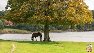 Beaulieu - Que faire dans la New Forest en Angleterre ? Visiter les plus beaux endroits à voir absolument dans la New Forest avec notre guide complet sur cette région.