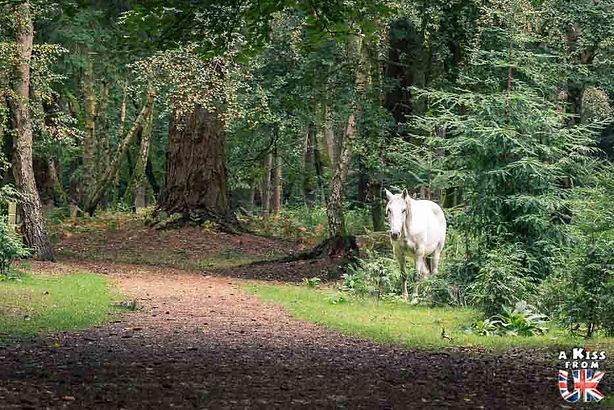La New Forest. Les régions du sud de l'Angleterre à visiter. Voyagez à travers les plus belles régions d'Angleterre avec nos guides voyage et préparez votre séjour dans les endroits incontournables d'Angleterre | A Kiss from UK