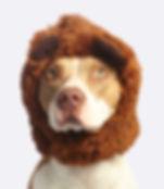 dog-with-brown-faux-fur-headband-800330.