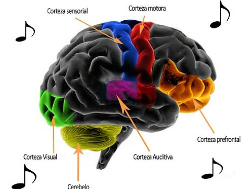 Musicoterapia y Bio Resonancia Correctiva