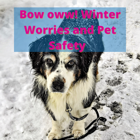 Bow Oww! Winter Worries and Pet Safety