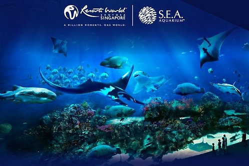 S.E.A Aquarium Singapore (C)