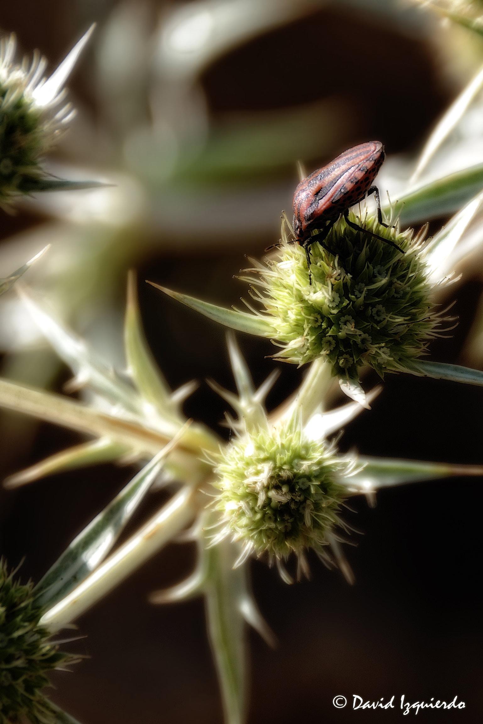 Insecto sobre una planta espinosa