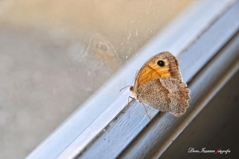 butterfly on the window.jpg