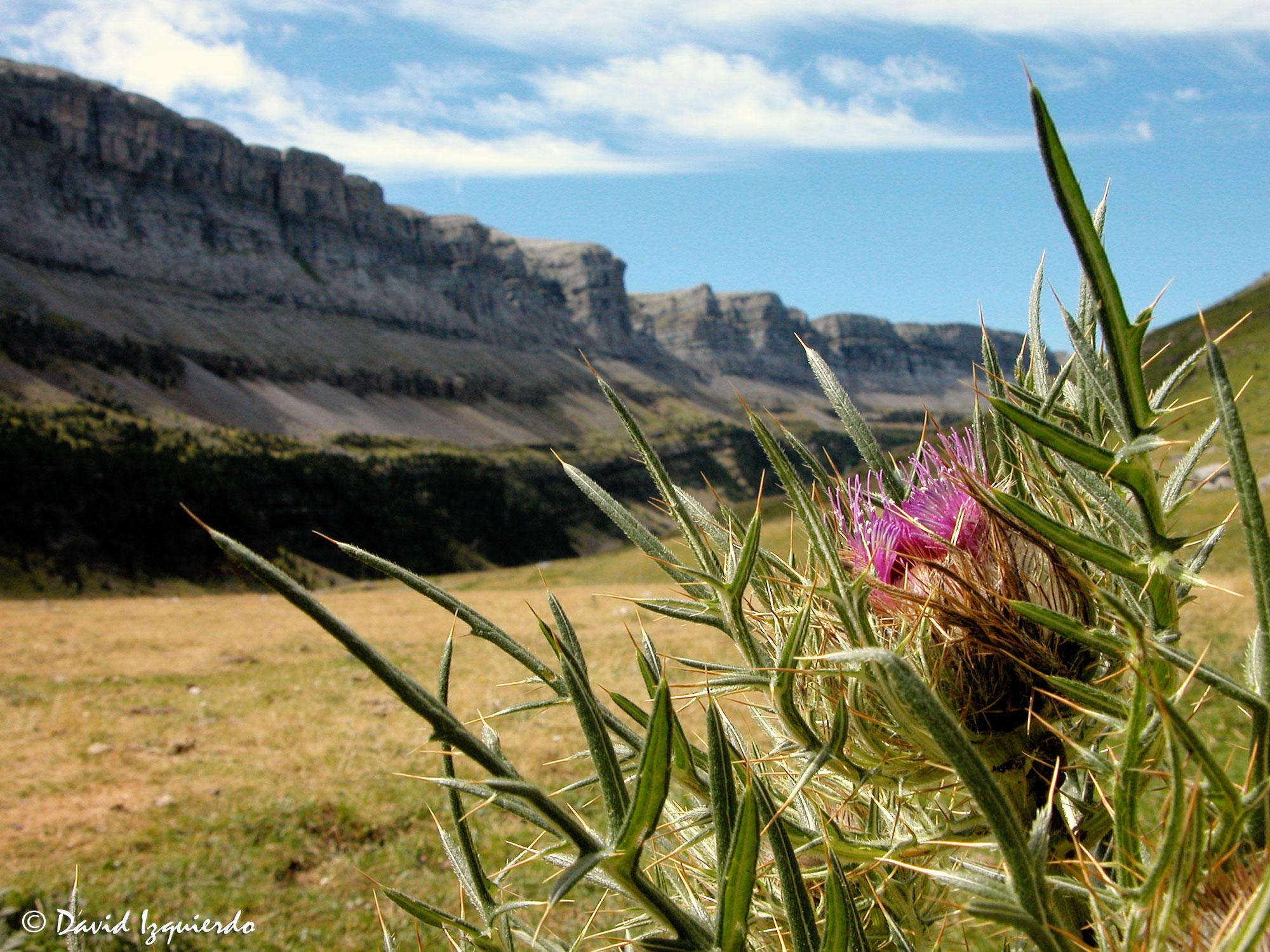 Planta y vistas del Parque de Ordesa