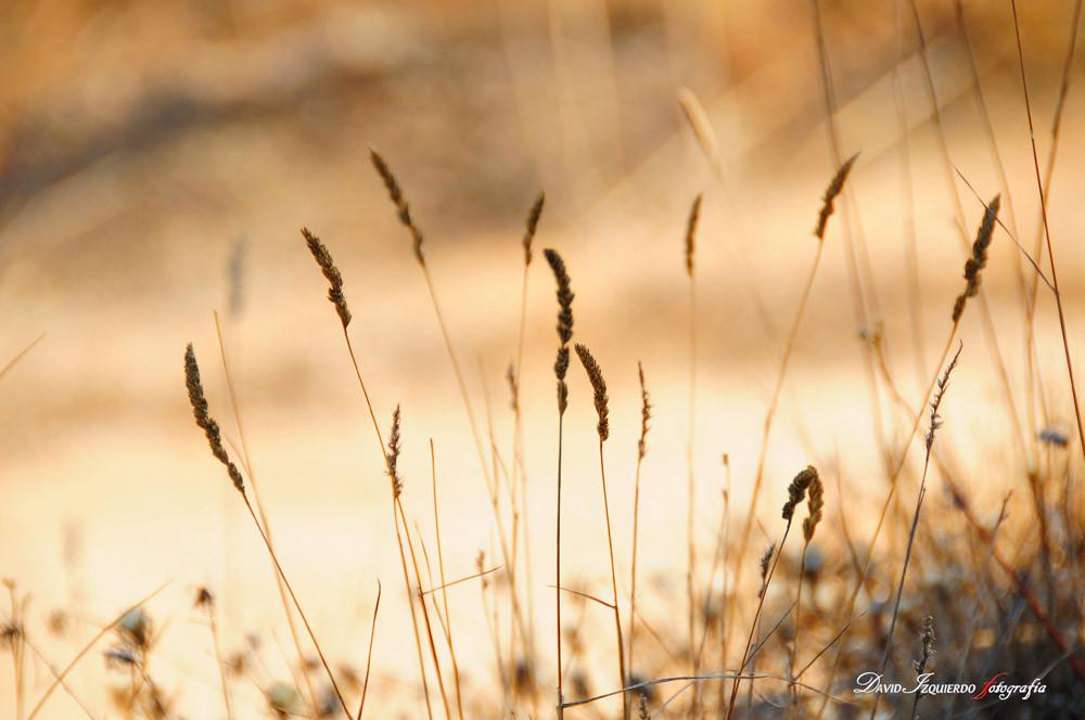 spikes in the field.jpg